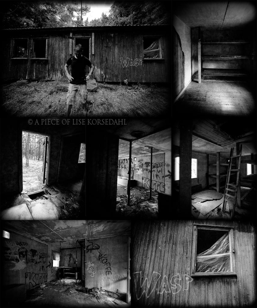 Evil Dead collage